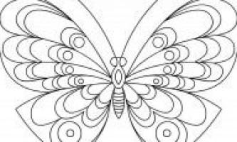 Розмальовки метелики