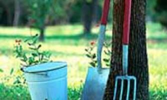 Сад та город в вересні. Корисні поради дачникам від досвідченого садівника