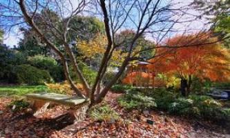 Сад в жовтні. Садові роботи в жовтні