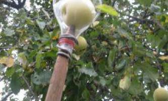 Знімач для яблук