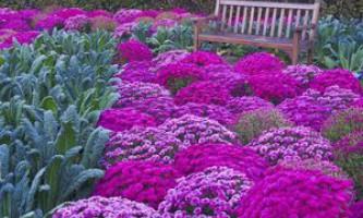 Сезонні клумби своїми руками з багаторічних квітів