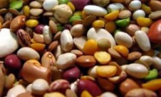 Сорти бобів