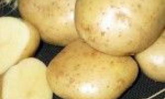 Сорти картоплі