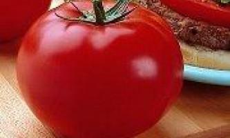 Сорти великоплідних томатів - найурожайніші і солодкі