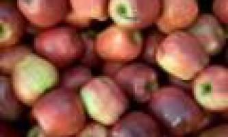 Рада зі зберігання яблук