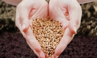 Терміни посадки насіння на розсаду