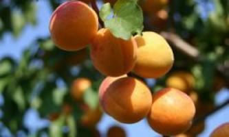Добрива для абрикоса