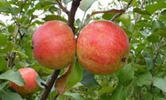 Добрива для яблунь