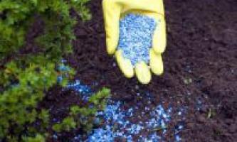 Добрива і підживлення на городі. Коли необхідно удобрювати город?