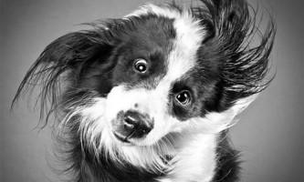 Унікальні портрети собак в русі