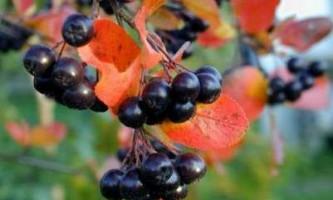 Варення з черноплодки - рецепт з вишневим листом і яблуками