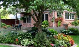 Тіньовитривалі рослини - як зробити сад в тіні пишним і красивим?