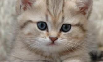 Загадки про домашніх тварин