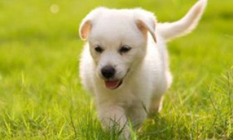 Зелений корм для собак